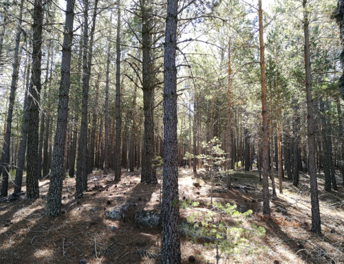 21 de Marzo Día Internacional de los Bosques
